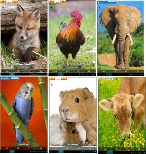 Screenshots dall'applicazione. alcuni degli animali.